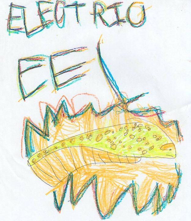 eel_drawing_2016