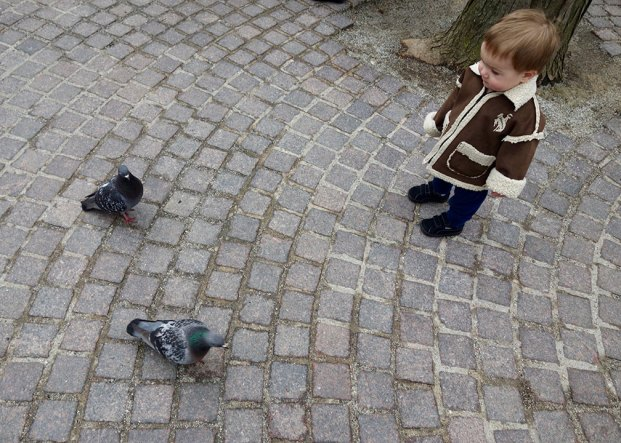 Quin_pigeons_03.26.17
