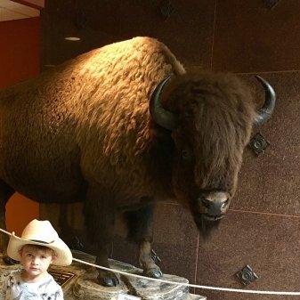 bison_boy_07.12.17