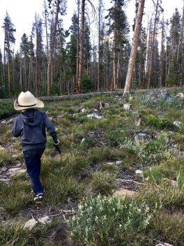 Henry_Centennial_Nat_Forest_07.08.17