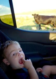 roadside_livestock_07.17.17