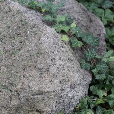 ivy_rock_08.15.17