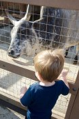 petting_zoo_02.20.18