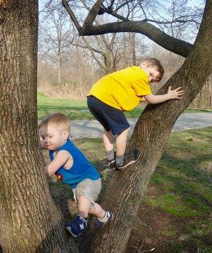 tree_climb_04.14.18