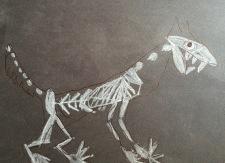 wolf_skeleton