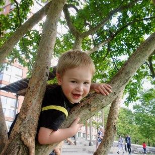 Quin_tree_climb_05.14.18