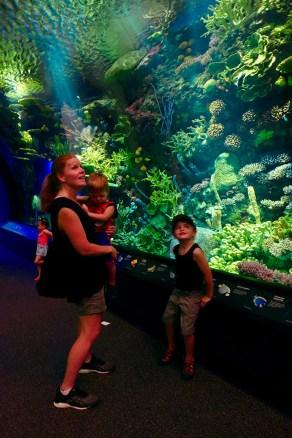 aquarium_reef_tunnel_07.05.18