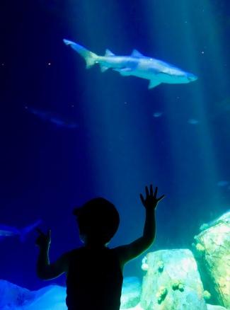 shark_spotting_07.05.18