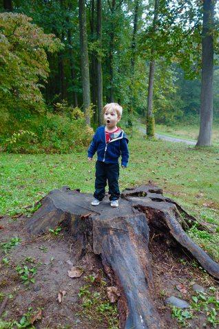 Quin_stump_10.08.18