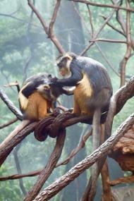 grooming_monkeys_04.24.19