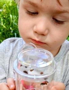 Quin_ladybug_closeup_06.15.19