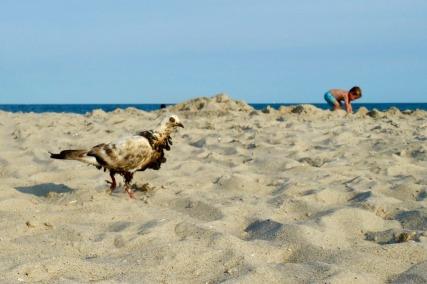 beach_combers_08.01.19