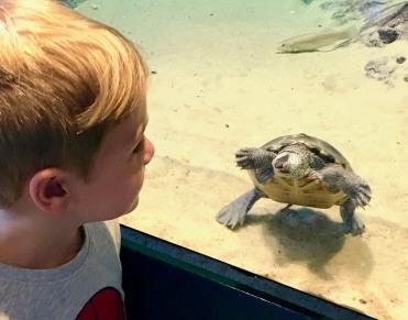Quin_turtle_08.13.19